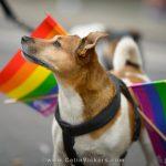 Rainbow Parade 2016