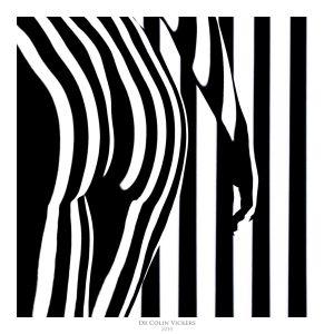 Fine Art Nude Photographer Vienna - Abstract Stripes On Model's Bum