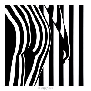 Fine Art Nude Photographer Vienna - Dr Colin Vickers - Stripes